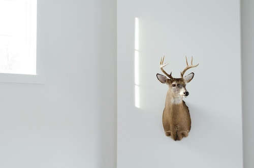 Deer, taxidermy. Photo by Taylor Wilcox on Unsplash